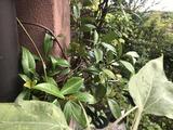 地蜂の巣、秋の花、新作アイス、ゴウヤ緑のカーテン、プチトマト、天野醤油「甘露しょうゆ煎餅」、朝顔、