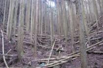 コミュニティビルダー協会コラム  ~高山市の木の駅プロジェクトについて~