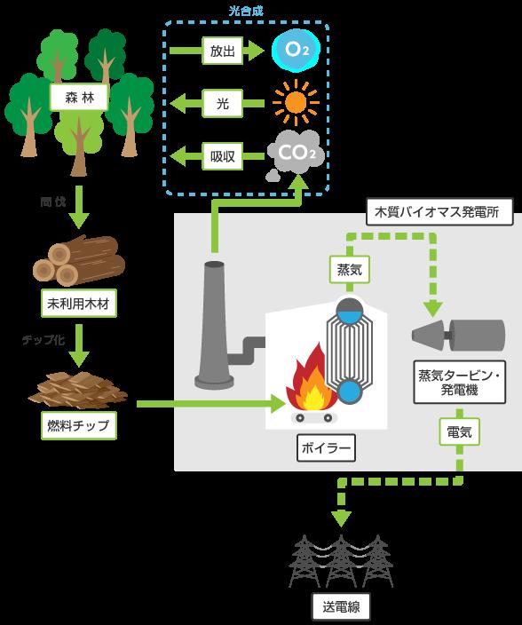 img_biomass_01